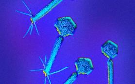 Как бактерии отличают свою ДНК от вирусной