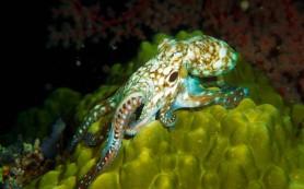 Осьминоги двигаются неритмично