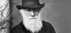 Ученые оспорили первенство Дарвина в создании теории эволюции