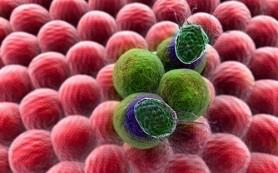 Найден белок, уничтожающий раковые клетки всех типов