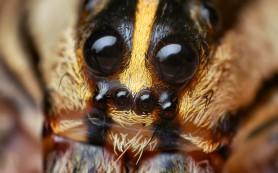 Умеют ли пауки петь песни и кто может их услышать?