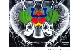 Биологи: мозг мух обладает встроенным компасом