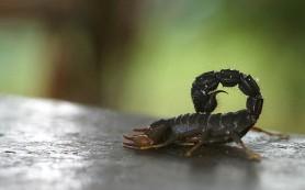 Стреляющие ядом скорпионы тратят его с умом