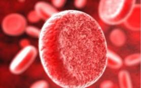 Канадские ученые научились конвертировать кровь