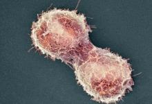 Ученые зафиксировали переход одноклеточных форм жизни к многоклеточным