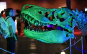 Обнаружен древнейший британский динозавр
