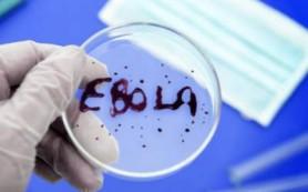 Новосибирские учёные подготовили вакцину против Эболы к испытаниям