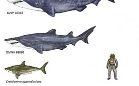 В США нашли крупнейшую акулу эпохи динозавров