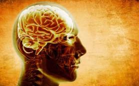 Шведские ученые создали искусственную нервную клетку