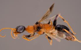 Оса-дементор превращает тараканов в зомби