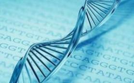 Обнаружен ген, определяющий будущее половой клетки