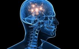 Зафиксирован момент формирования идеи в мозге