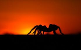 В жару пауки путаются в ногах
