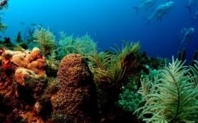 Очистить океаны от токсичных загрязнений помогут искусственные кораллы