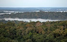 Древняя Амазония оказалась цветущим садом с многомиллионным населением