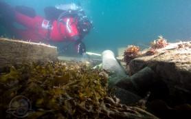 Археологи нашли на дне заполярного моря следы пропавшей экспедиции Франклина