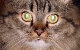 Форма зрачков животного позволяет определить его место в пищевой цепи