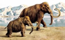Найден метод точного определения веса мамонтов