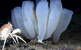 Морские губки учат сопромату