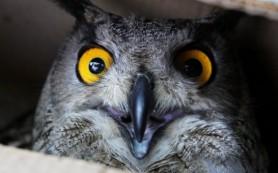 Центр реабилитации птиц откроется в заповеднике «Кузнецкий Алатау»