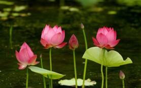 Древнейшие цветы, предположительно, росли в водоемах