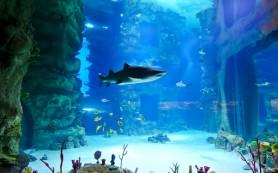 «Океанариум — прежде всего научно-практическая исследовательская база»