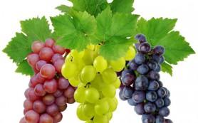Израильские археологи обнаружили сохранившиеся зерна винограда возрастом 1500 лет
