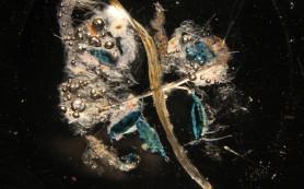 В океане было найдено несколько тысяч неизвестных организмов