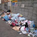 Биоразлагаемые пластики помогут решить проблему мусора