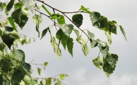 Откуда берется свежий запах леса после дождя?