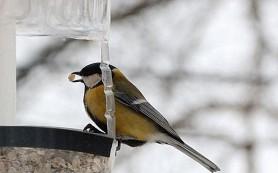 Экологи нашли в желудках у птиц пластик