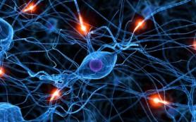 Соногенетика: нейроны снабдили «ушами»