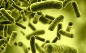 Кишечные бактерии играют ключевую роль в защите от болезней