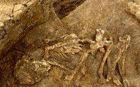 Британцы бронзового века оказались любителями мумий