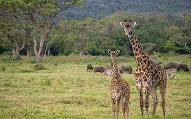 Экологический туризм оказался вреден для животных