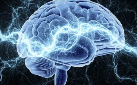 Как обучение влияет на гены мозга