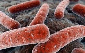 Бактерии общаются электрическими сигналами