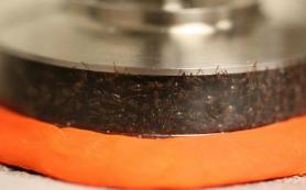 Физики доказали, что муравьи — это жидкость