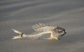 Сибирские археологи обнаружили рыбозавод каменного века