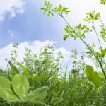Растения воюют друг с другом молекулярно-генетическим оружием