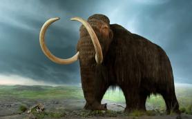 Палеонтологи из Якутии доказали, что мамонты выжили благодаря «варежкам»