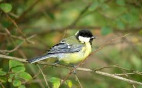 Крупные птицы быстрее привыкают к людям