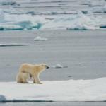 В Арктике нашли останки древних охотников, питавшихся белыми медведями
