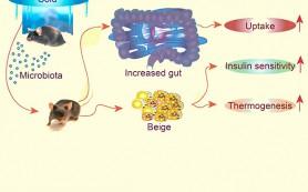 Похудеть быстро помогут холод и микробы