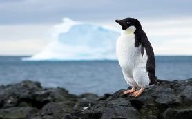 Бактерии из Антарктиды отправят в космос в 2020 году