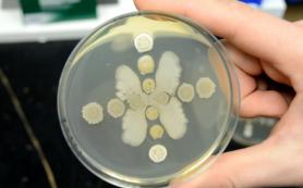 Микробиологи открыли новый антибиотик, наблюдая за «битвой» двух видов бактерий