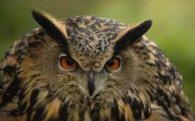 Когда на Земле появились первые современные птицы