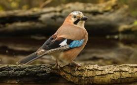 Ученые объяснили редкость зеленых птиц