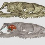 Палеонтологи разобрались с утерянными конечностями змей