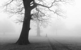 «Ёжик в тумане», или почему нам что-то кажется?